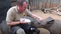 Rhino rehab therapy for war veterans