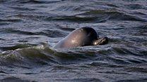 شاهد عینی: ماجرای نهنگ سرگردان رودخانه تیمز لندن