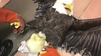 Huge ice ball stuck on eagle