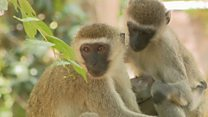 Why I dedicate my life for monkeys' survival