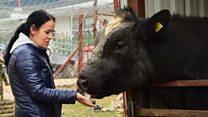 Türkiye'nin ilk ve tek 'kurtarılmış çiftlik hayvanları barınağı'