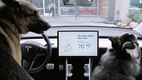 'Dog mode' keeps pets cool in cars