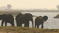 Botswana's elephant hunting dilemma