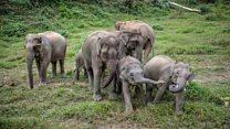 بوتسوانا؛ شکار فیل آزاد میشود تا گوشتشان به مصرف حیوانات خانگی برسد