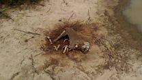 Botswana's poaching hot spots show dozens of dead elephants