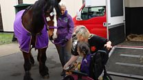 Patient reunited with horse after surgery