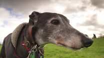 'I think greyhound racing should be banned'