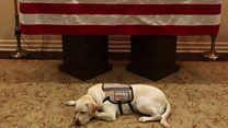 What Bush's dog Sully did next