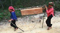 Rừng Việt Nam qua ba thập kỷ trong ảnh vệ tinh Google Earth