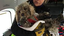 Stranded dog rescued from mountain