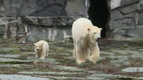 Baby polar bear debuts at Berlin zoo