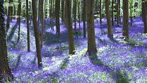 Những 'địa đàng' đẹp nhất trong mùa xuân