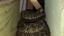 Пуна кућа - змија