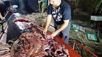 Kit koji je progutao 40 kilograma plastike