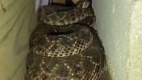 एकाच घरात 45 साप निघाले आणि...