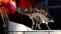 London museum joins Wyoming dinosaur hunt