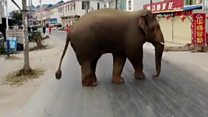 Elephant in 'bad mood' joins commute