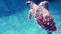 Dubai hotel for sick and injured turtles