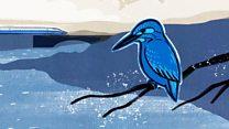 นกกระเต็นช่วยพัฒนารถไฟหัวกระสุนอย่างไร