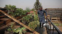 Urban farming in Kampala