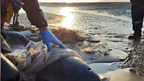 Porpoise rescued from beach