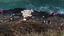 Stranded flock rescued in 10 days