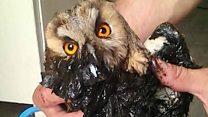 Усыпить или спасти? Белорусская семья помогает диким птицам-инвалидам