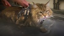 Soggy moggy's walk to recovery