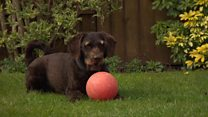 Chocolate-eating dog 'lucky to be alive'