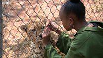 10代少女、孤児のチーターの里親に ケニア