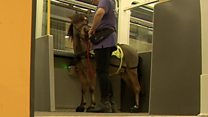 Horsing around on the Metro