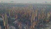 ਖੇਤਾਂ ਵਿੱਚ ਅੱਗ ਲੱਗਣ ਕਾਰਨ ਪੰਜਾਬ ਦੇ ਇਨ੍ਹਾਂ ਪਿੰਡਾਂ ਨੂੰ ਭਾਰੀ ਨੁਕਸਾਨ