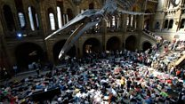 Climate protesters stage museum 'die-in'