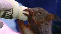 Squirrels saved