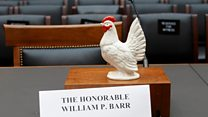 Why did the chicken go to Congress?