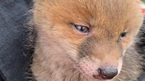 Fox cub rescued from fire gets new home