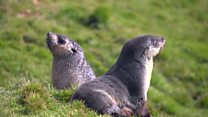 Meet the scientists studying seal poo