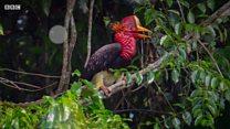 Thợ săn hoàn lương làm kiểm lâm ở Sumatra