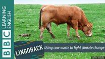 Usando esterco de vaca contra degradação do solo