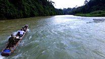 Bendungan di tengah Leuser: 'Kepunahan gajah Sumatra, tinggal menunggu waktu'