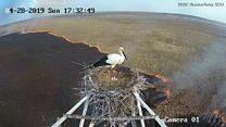 Em cena tocante, pássaro protege ninho durante incêndio; veja vídeo