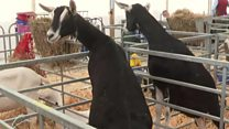 What are farmers talking about at Balmoral Show?
