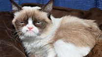 Грампи Кэт умерла: неизвестные факты о кошке-меме
