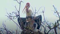సైబీరియన్ పక్షులు