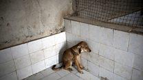 حامیان حقوق حیوانات در ایران: سگها را نکشید