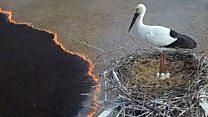 Аисты и страсти: как защитники животных спасают птиц от пожаров