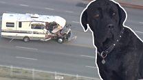 Дом на колесах и с собаками. Необычная погоня в Лос-Анджелесе