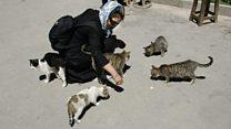 ممنوعیت واردات غذای سگ و گربه در ایران