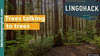 A escondida 'rede social' subterrânea formada por árvores e fungos