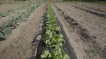 Growing crops in the shadow of Fukushima